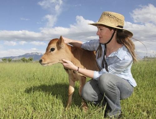 """Подмярка 6.3 """"Стартова помощ за развитието на малки стопанства"""", Програма за развитие на селските райони 2014-2020 г."""
